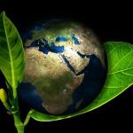 Erdekugel im Blatt
