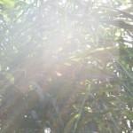 Sonnenstrahlen vor Schilf