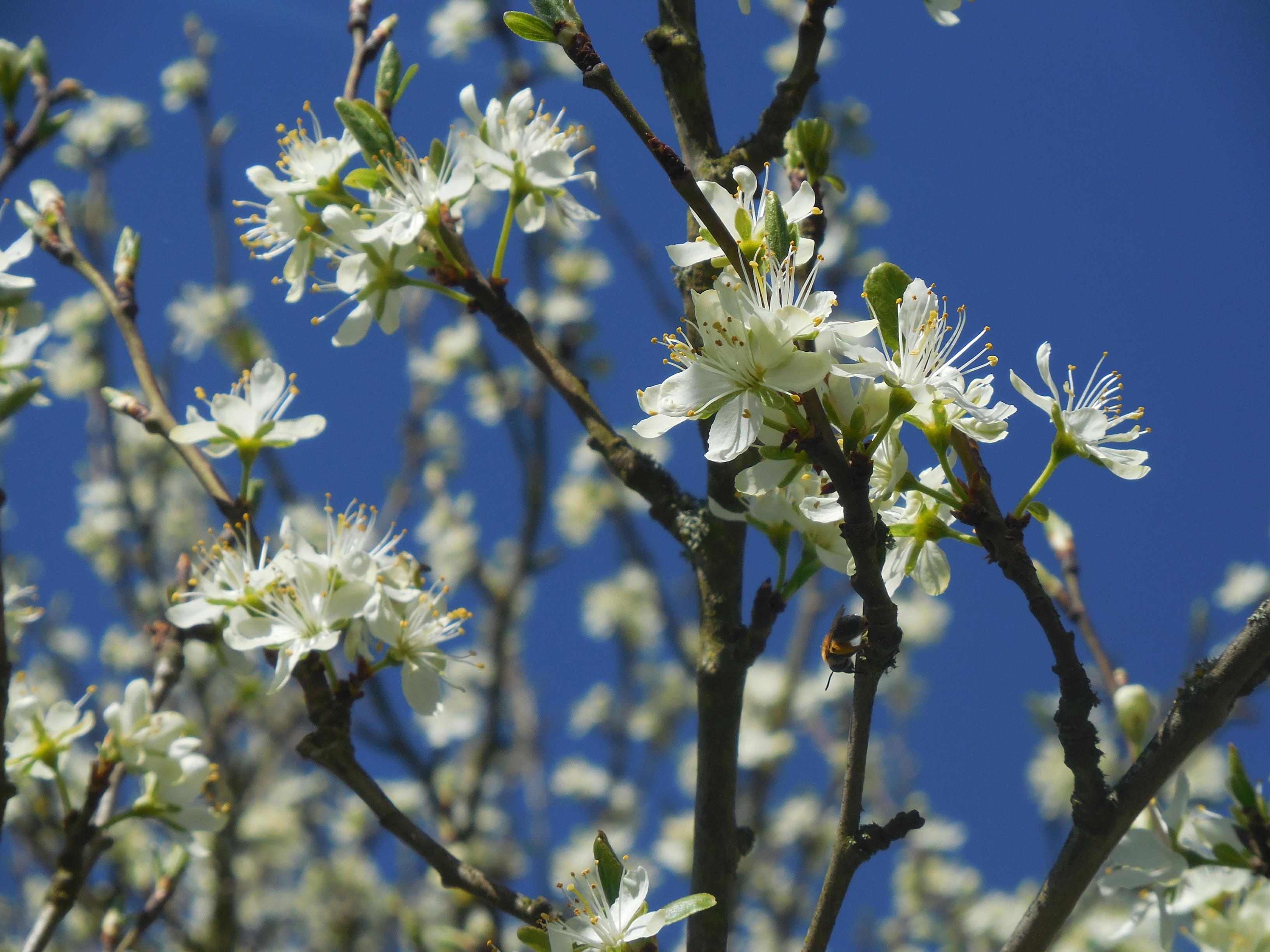 Blütenstrauch Nahaufnahme