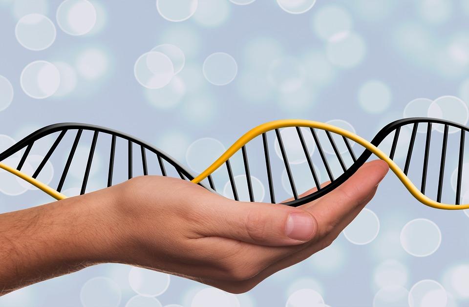 DNA GKDNA